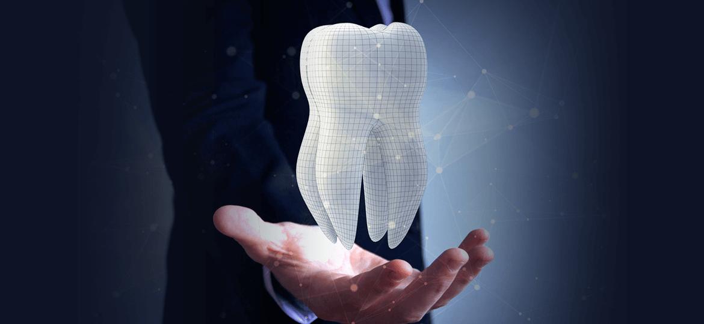 iDent Roma - La struttura del dente